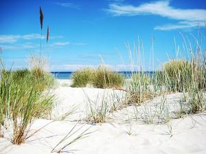 Der Strand von Kölpinsee